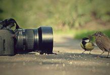 Đăng ký bản quyền tác giả nhiếp ảnh