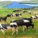 Đăng ký bảo hộ nhãn hiệu ngành chăn nuôi